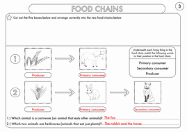 Food Chain Worksheet Pdf Unique Year 4 Science Animals Including Humans Digestion