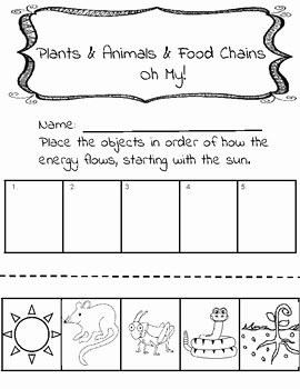 Food Chains and Webs Worksheet Beautiful Food Chain Worksheet by Brown S Bunch Of Brilliance