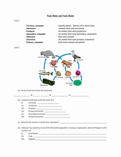 Food Chains and Webs Worksheet Fresh Food Webs and Food Chains Worksheet by Alexjfirth