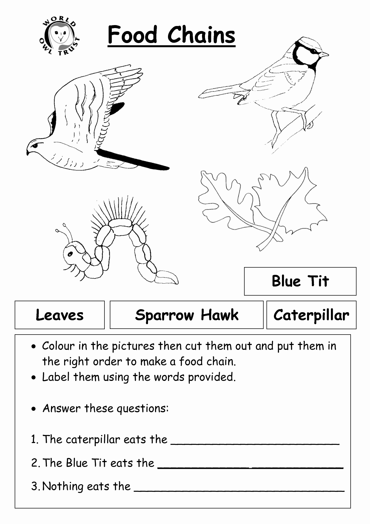 Food Chains and Webs Worksheet Inspirational 12 Best Of Worksheets Food Chain Web Pyramid Food