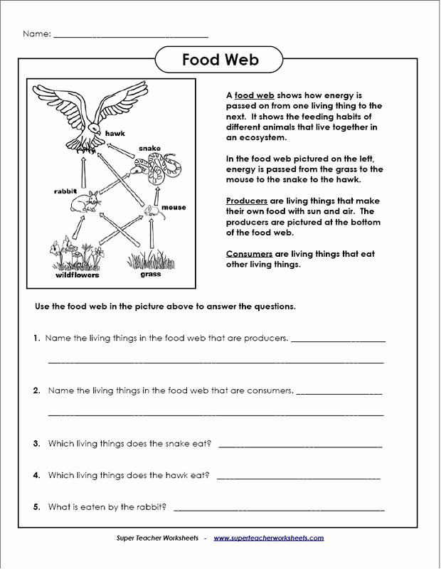 Food Chains and Webs Worksheet Lovely 10 Best Of Energy Levels Worksheet Energy Flow