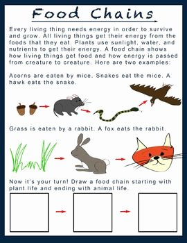 Food Chains and Webs Worksheet Luxury 1000 Images About Education Ecosystems and Food Chains On