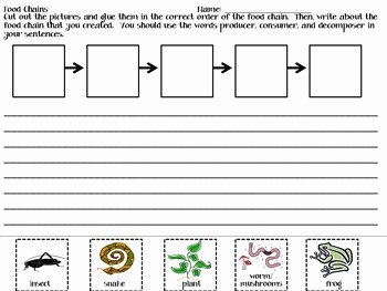 Food Chains and Webs Worksheet New Food Chains Writing Activity by Jennifer Petko