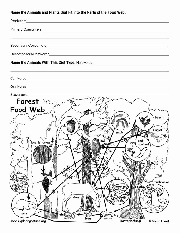 Food Chains and Webs Worksheet Unique Deciduous forest Food Web Activity