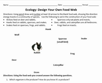 Food Chains and Webs Worksheet Unique Design A Food Web Worksheet by Beverly Biology
