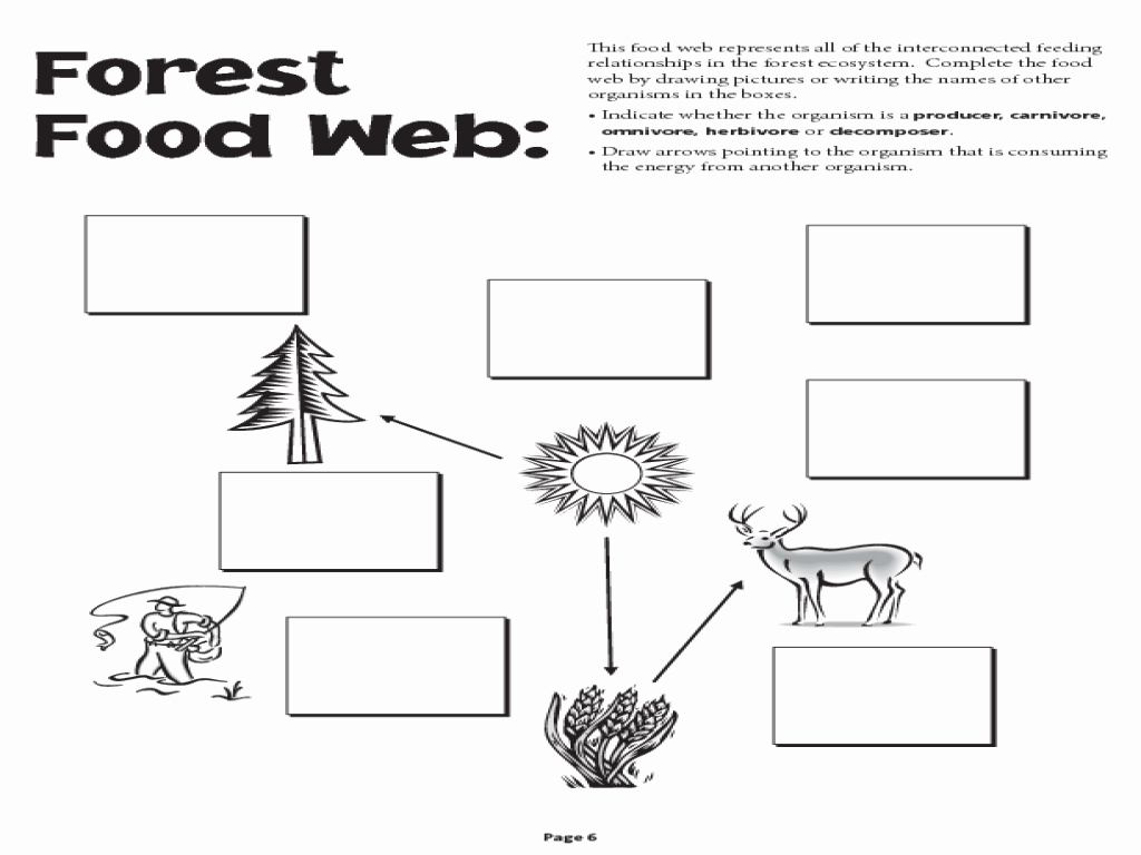 Food Chains and Webs Worksheet Unique Food Chain Food Web Worksheet the Best Worksheets Image