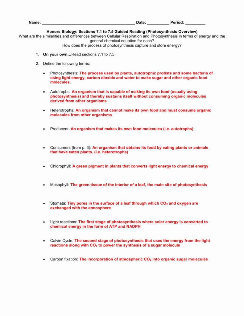 Food Inc Worksheet Answers Beautiful Two Factors Affecting Synthesis Worksheet Answers