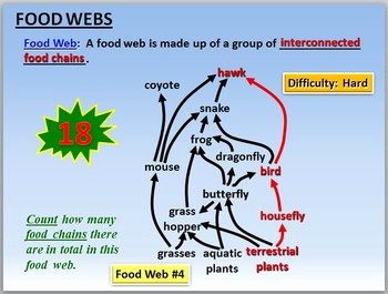 Food Web Worksheet Answer Key Awesome Food Webs Powerpoint Activity with Worksheet Editable by