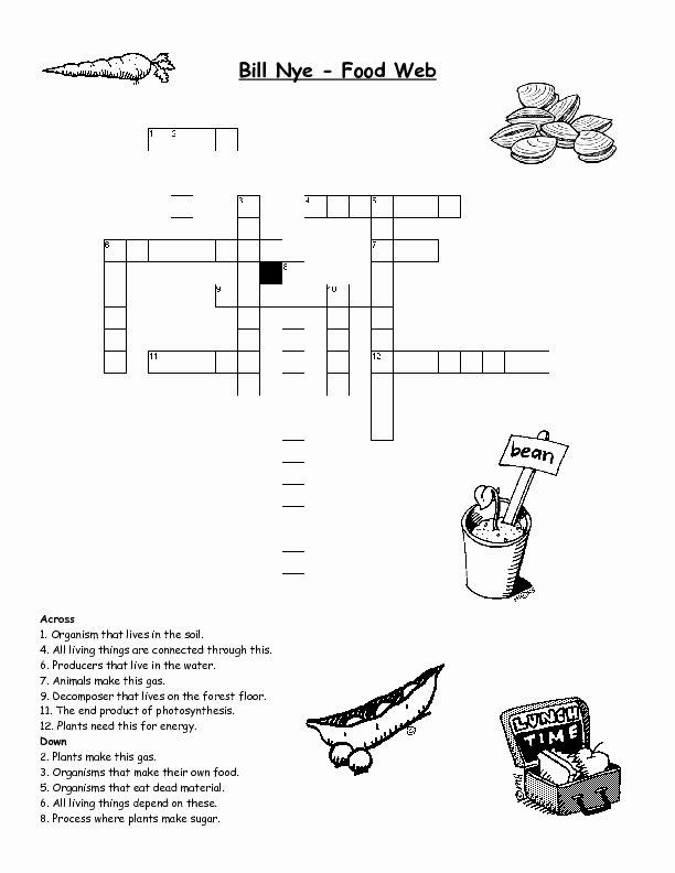 Food Web Worksheet Answer Key Best Of Bill Nye Food Web Worksheet for 3rd 4th Grade