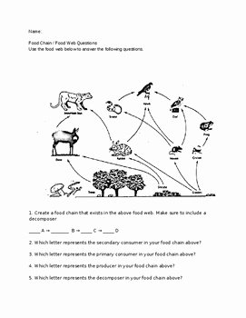 Food Web Worksheet Answer Key Lovely Food Web assignment Answer Key