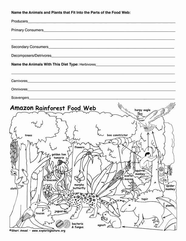 Food Web Worksheet Answer Key Lovely Food Web Worksheet