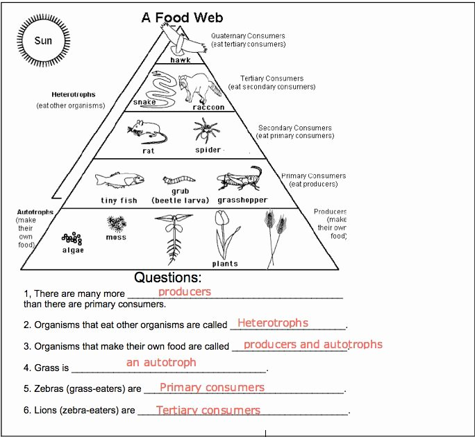 Food Web Worksheet Answer Key Luxury Food Chains and Food Webs Worksheets for Third Grade