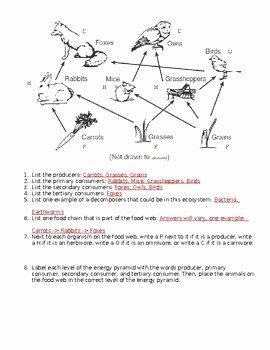 Food Web Worksheet Answer Key Luxury Interpreting A Food Web Worksheet by Must Teach Middle