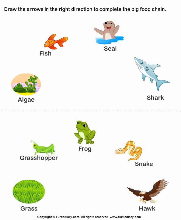 Food Web Worksheet Answer Key New Science Food Chain Worksheets Worksheet Turtle Diary