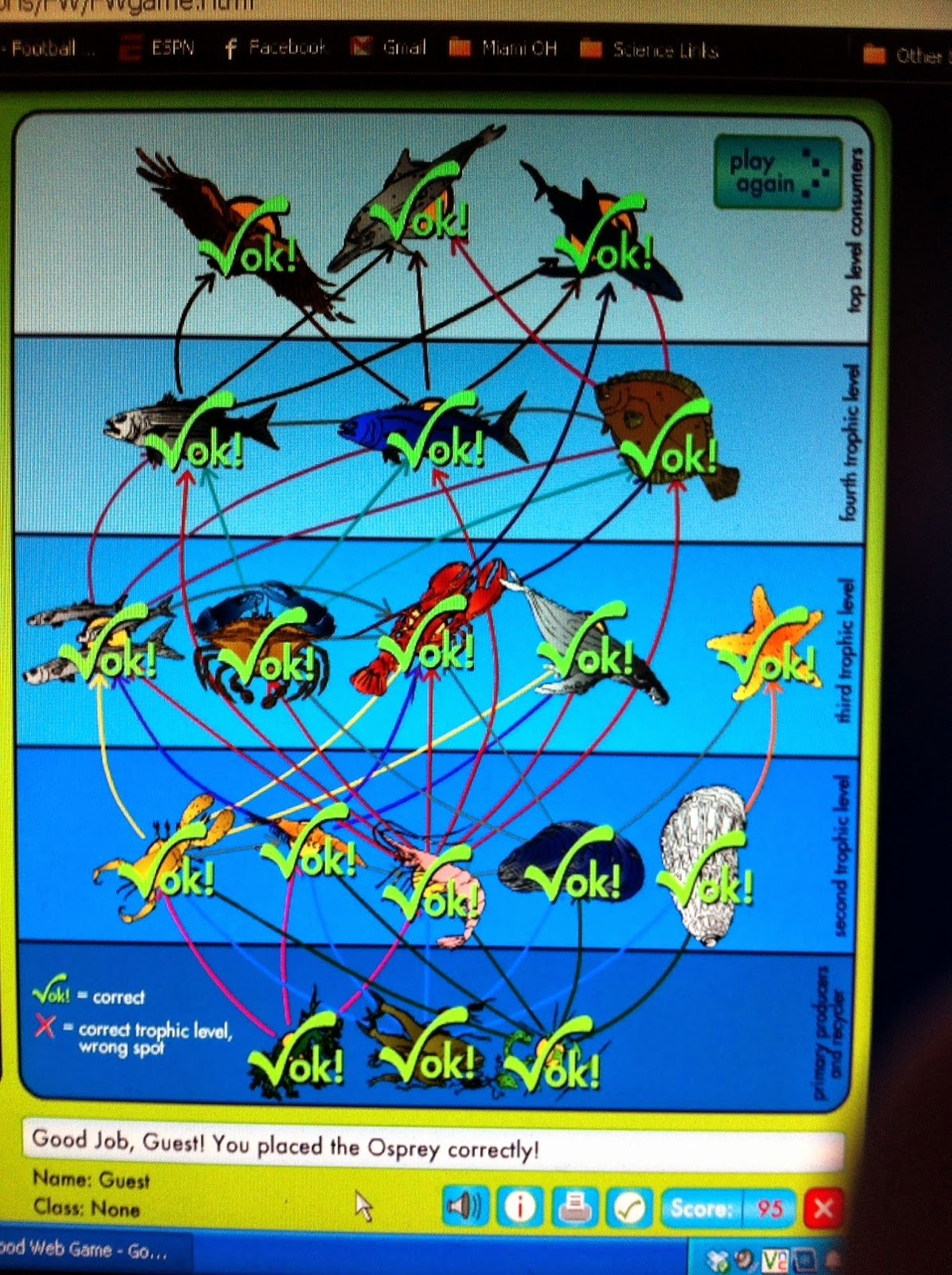Food Web Worksheet Answers Awesome Marine Conservation Lessons Plans Sharks and the Marine