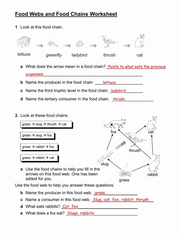 Food Web Worksheet Answers Best Of Food Chain Worksheet
