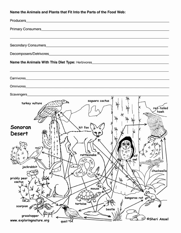 Food Web Worksheet Answers Lovely Desert Food Web Activity