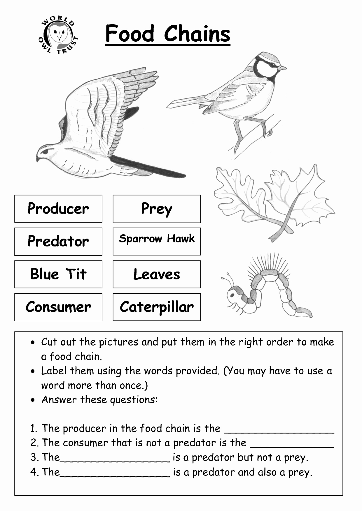 Food Web Worksheet Answers Lovely Question Worksheet Category Page 2 Worksheeto