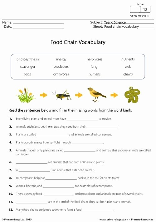 Food Web Worksheet Answers Unique Food Chain Vocabulary