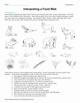 Food Web Worksheet Answers Unique Food Web Worksheet Answers