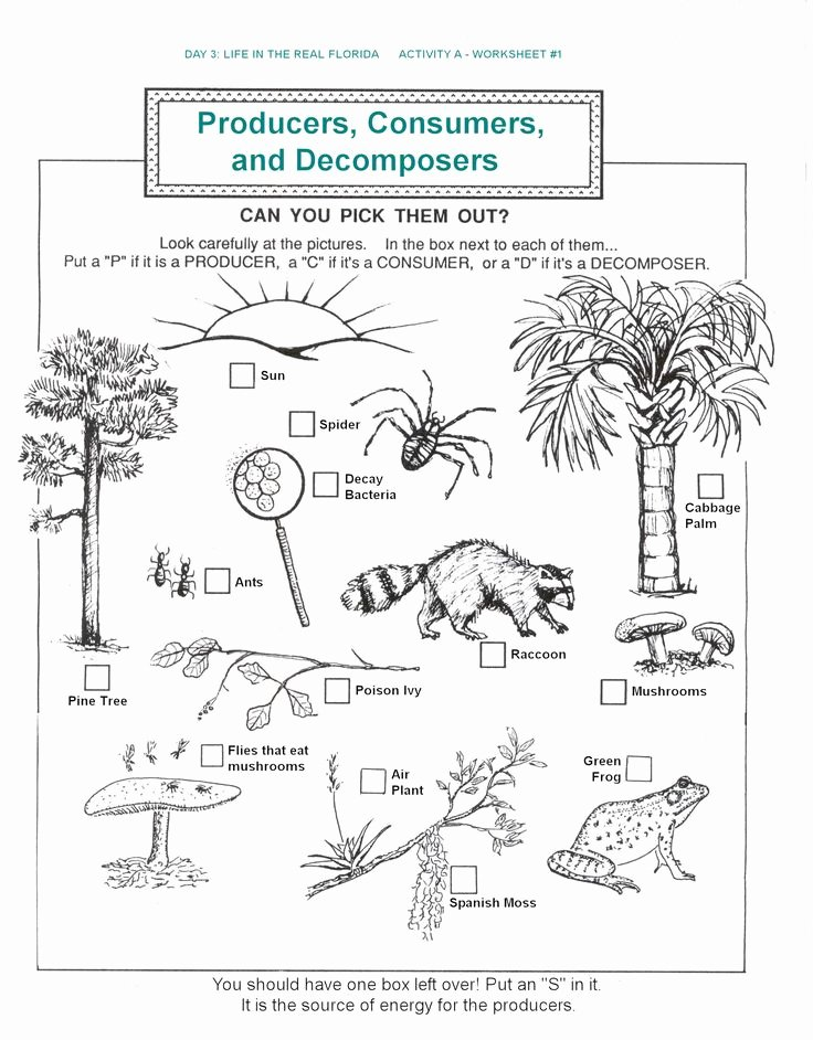 Food Web Worksheet High School Best Of De Posers Producers Consumers Food Chains Worksheets