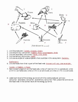 Food Web Worksheet High School Best Of Fifth Grade Food Web Worksheets Fifth Best Free