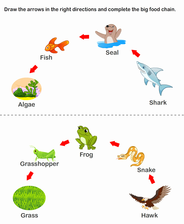Food Web Worksheet High School Best Of Food Web Biodiversity Pinterest