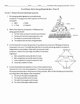 Food Web Worksheet High School Elegant Food Chain Web Energy Pyramid Quiz form B by Patton