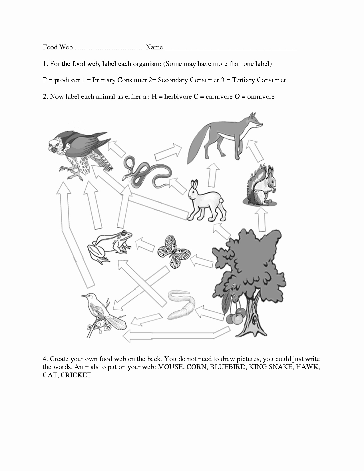 Food Web Worksheet High School Fresh 8 Best Of Ecosystem Food Chain Worksheet High