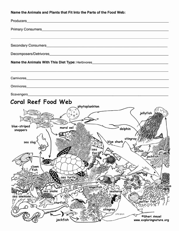 Food Web Worksheet High School Inspirational Coral Reef Food Web Activity