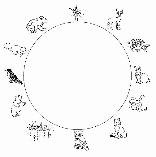 Food Web Worksheet High School Lovely Food Web Worksheet