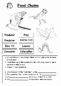 Food Web Worksheet High School Luxury Cut and Paste Worksheet Category Page 1 Worksheeto