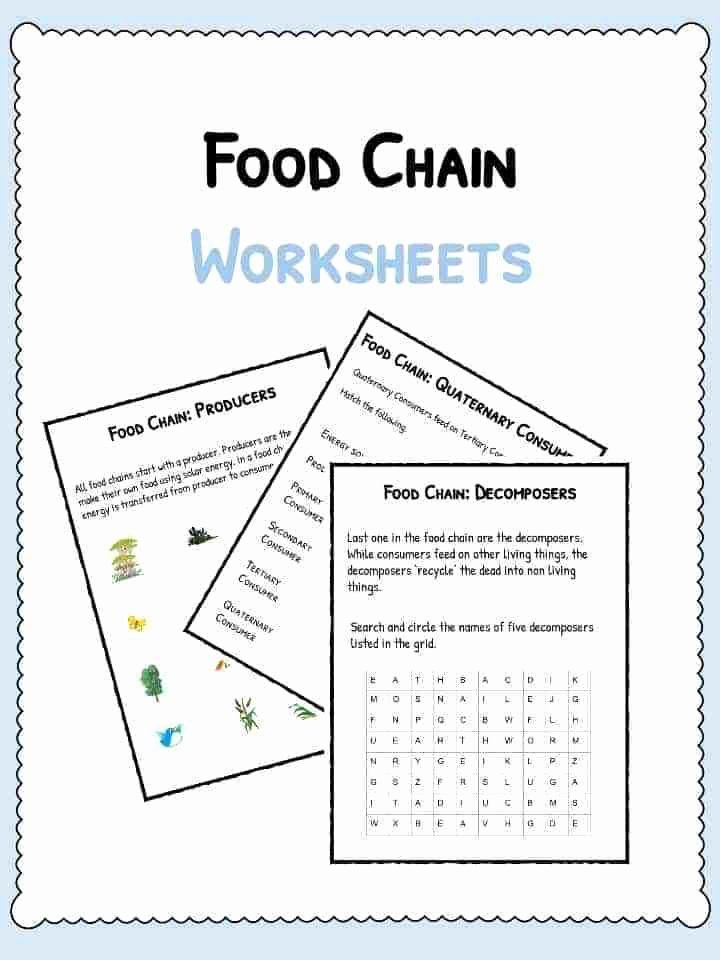 Food Web Worksheet High School New Behr John Biology Chapter Bacteria Worksheet High School