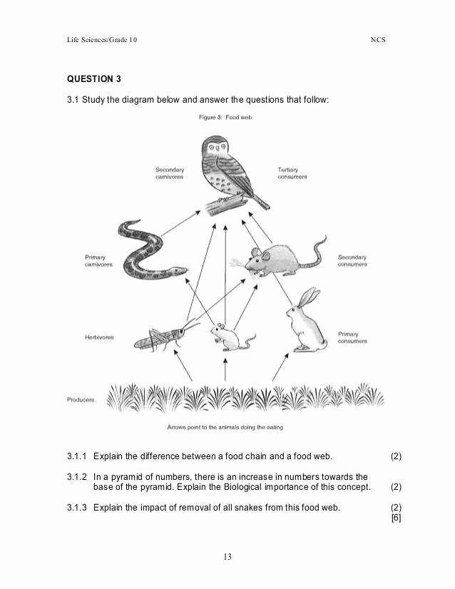 Food Web Worksheet Pdf Awesome Food Chain Worksheet