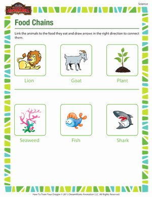 Food Web Worksheet Pdf Awesome Food Chains – Printable 2nd Grade Science Worksheet