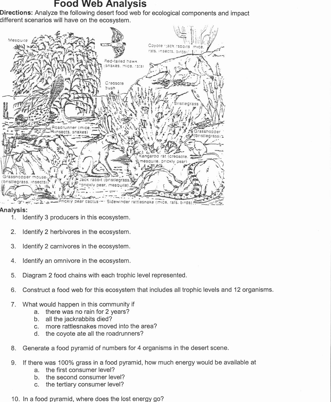 Food Web Worksheet Pdf Best Of Klimttreeoflife Resume Site