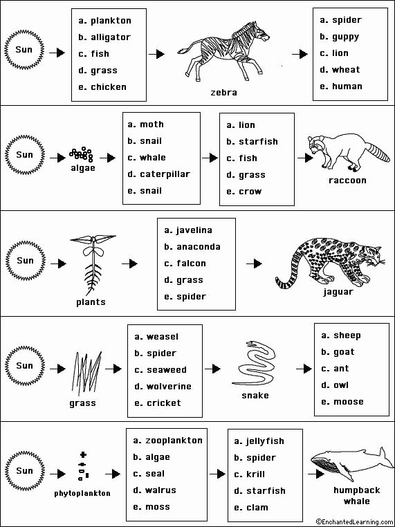 Food Web Worksheet Pdf Best Of Worksheet Food Web Worksheets for High School Food