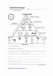 Food Web Worksheet Pdf Elegant Food Chain Worksheet Pdf the Best Worksheets Image