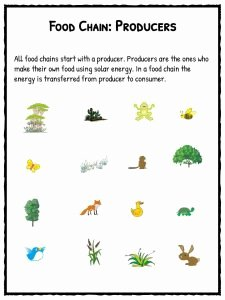 Food Web Worksheet Pdf Inspirational Food Chain Facts Worksheets Species Energy Pdf Resource