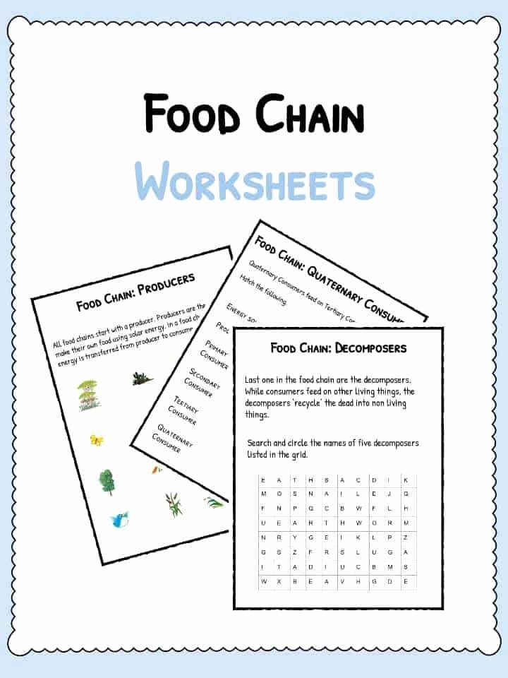 Food Web Worksheet Pdf Luxury Food Chain Worksheets