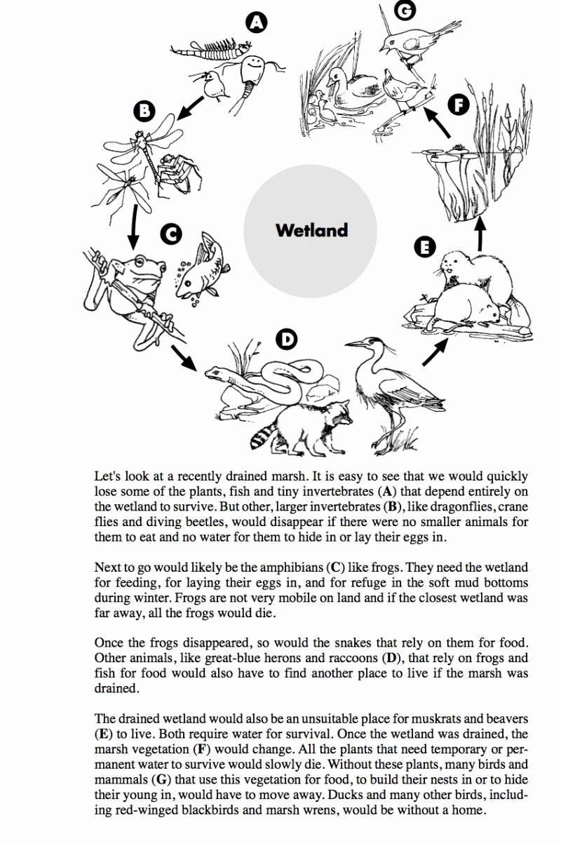 Food Web Worksheet Pdf New Food Web Worksheet Pdf the Best Worksheets Image