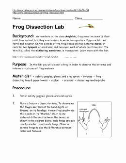 Frog Dissection Pre Lab Worksheet Beautiful Frog Anatomy Study Guide Answer Key