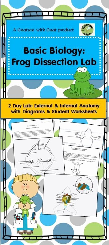 Frog Dissection Worksheet Answer Key Awesome This Product Has Everything You Need Just Add Frogs This