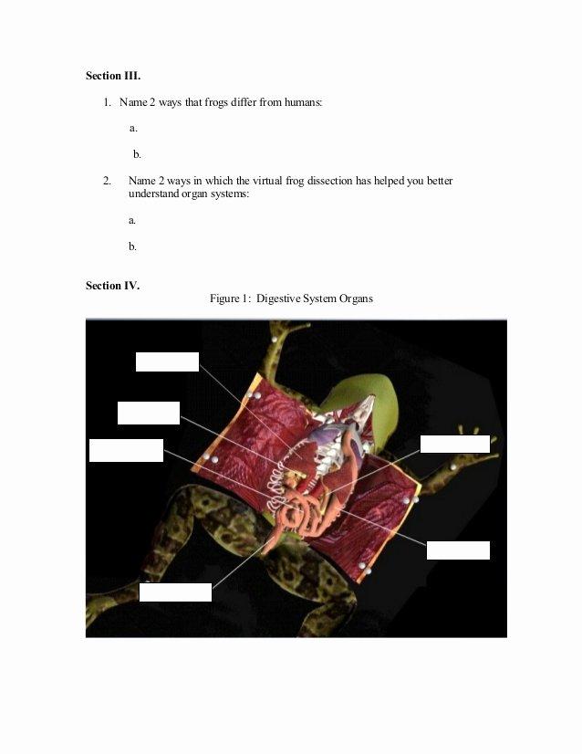 Frog Dissection Worksheet Answer Key Elegant Frog Dissection Worksheet