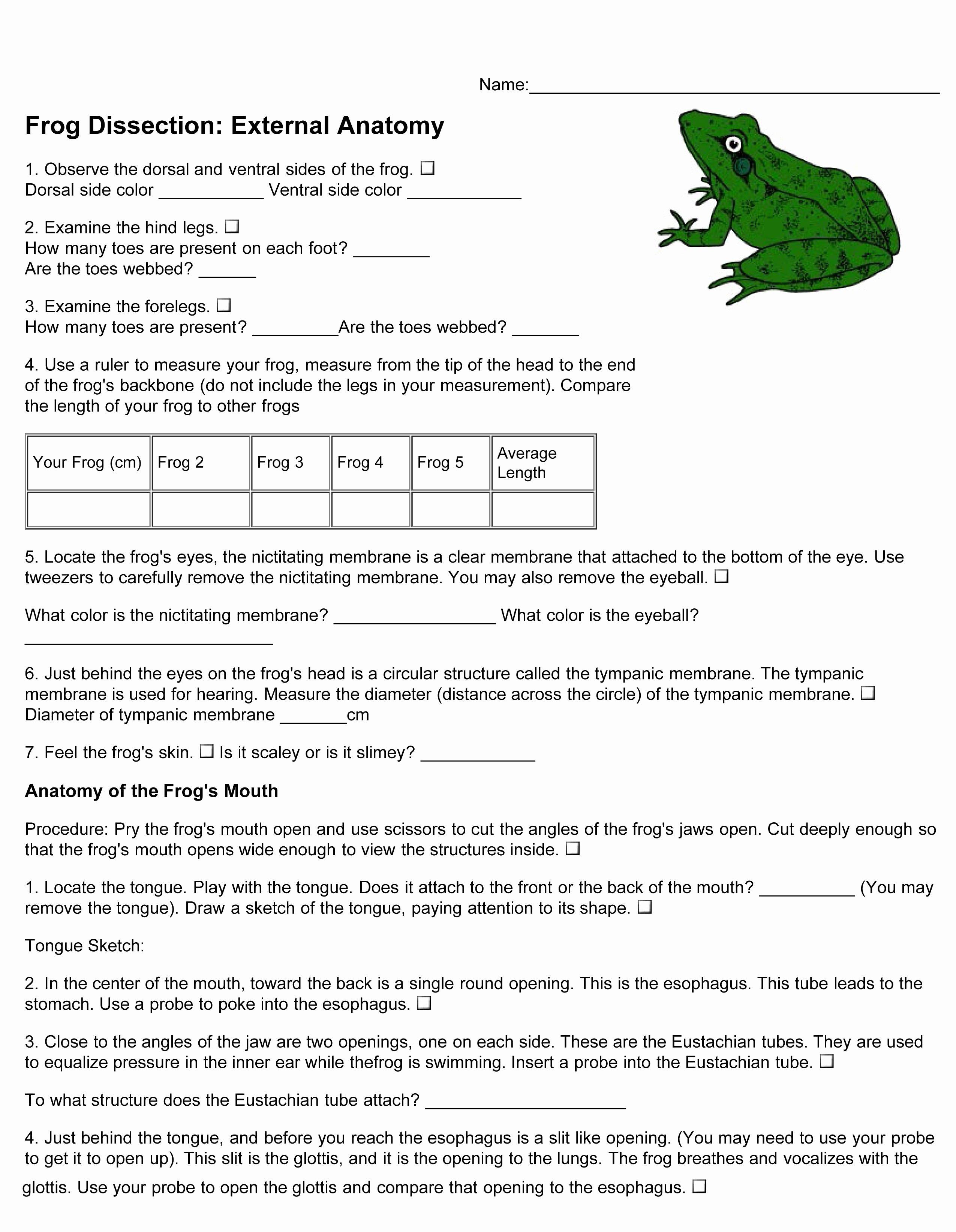 Frog Dissection Worksheet Answer Key Elegant Virtual Frog Dissection Worksheet Answer Key