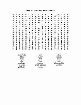 Frog Dissection Worksheet Answer Key Unique Frog Dissection Word Search by Everything Science and