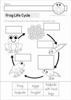 Frog Life Cycle Worksheet Awesome Frog Life Cycle Cut and Paste Unit A Page From the Unit
