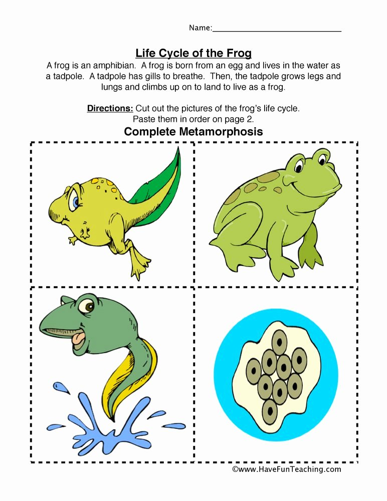 Frog Life Cycle Worksheet Awesome Frog Life Cycle Worksheet