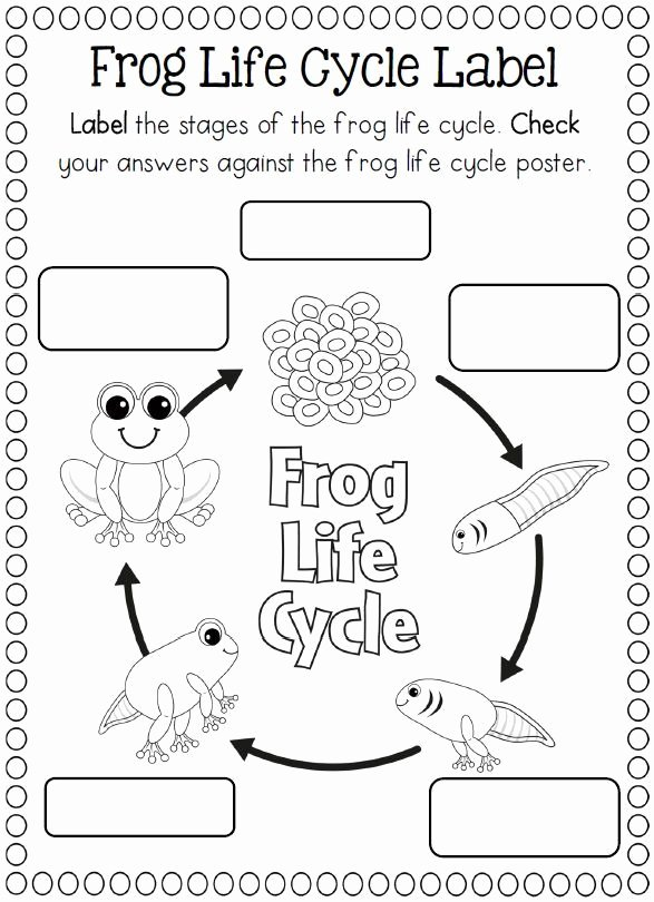Frog Life Cycle Worksheet Awesome Life Cycle Of A Frog Coloring Page