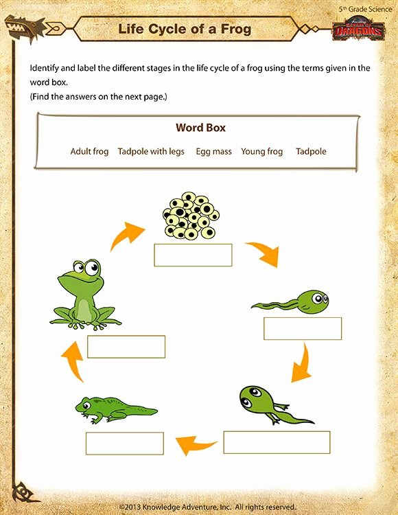 Frog Life Cycle Worksheet Awesome Life Cycle Of A Frog Printable Science Worksheets